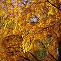 Photos: 秋色に染まる‥。
