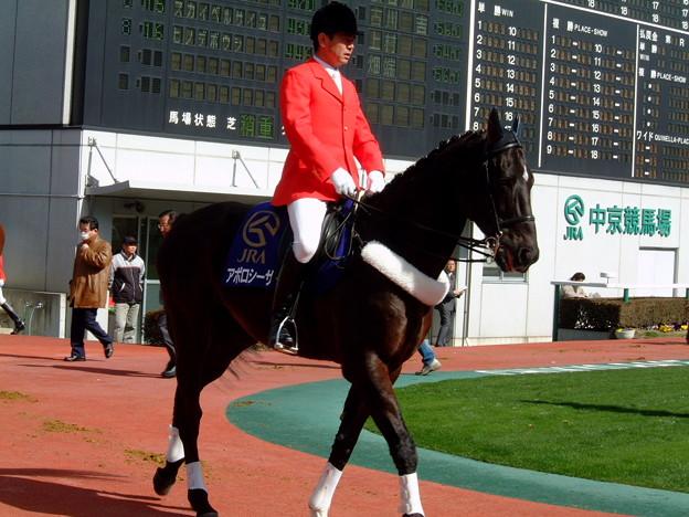 中京競馬場誘導馬