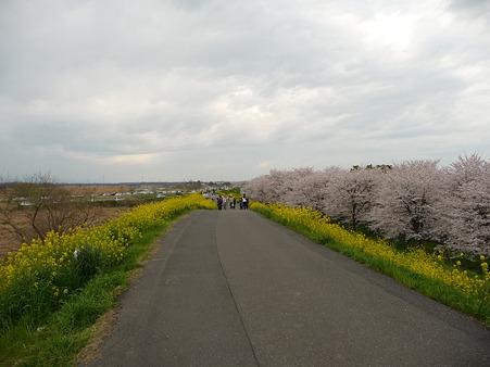 100411-熊谷桜堤 (47)