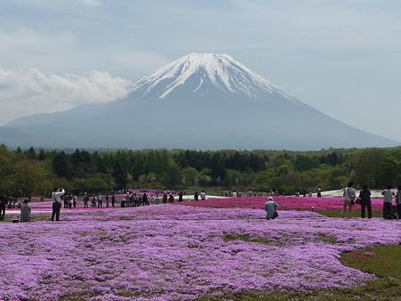 100518-富士芝桜まつり-78
