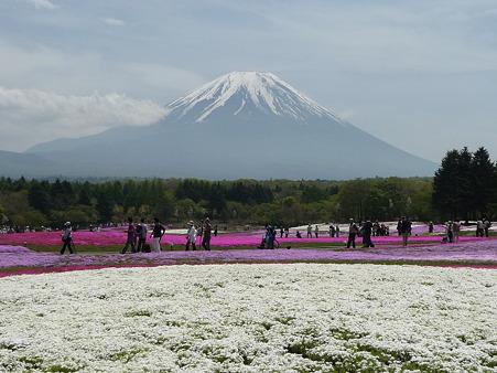 100518-富士芝桜まつり-80