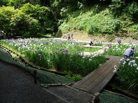 100615-明月院裏庭園-58