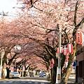 桜前線到着ー1