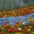 写真: 花の河・・・