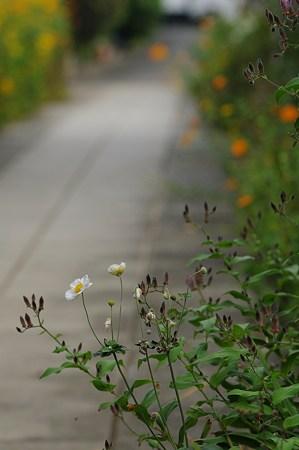 参道の秋。