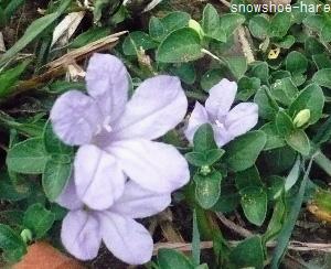 Photos: 地面の花