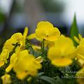 Photos: 花 NEX-5 FD50 F1.4