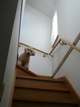 階段が降りれないくーかい 2