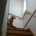 写真: 階段が降りれないくーかい 2