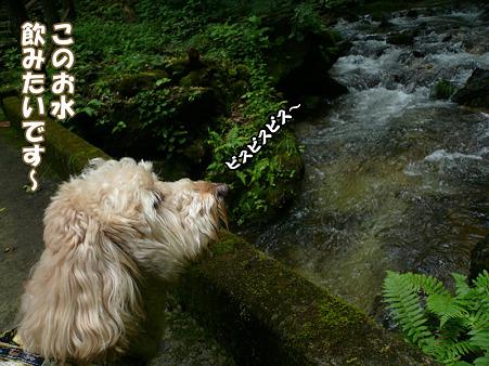 岩手 不動の滝 12