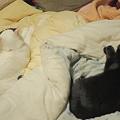 写真: 寝るのもシンクロ