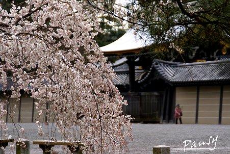 しだれ桜・・18 京都御苑 2010