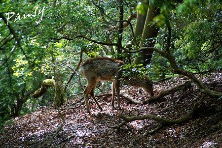 ささやきの小径で会った鹿さん・・