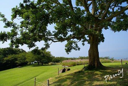 樹のある風景・・2