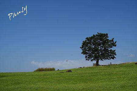 樹のある風景・・3