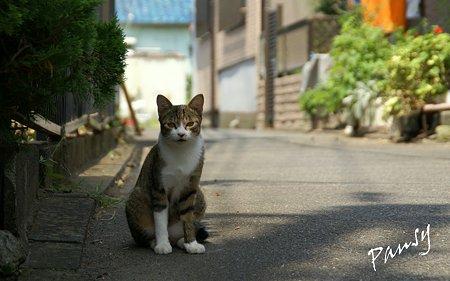 二宮の猫さん・・