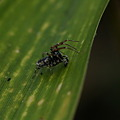 Photos: クモ、この格好はまるでマタドール 等倍