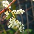写真: 咲く・・・・。