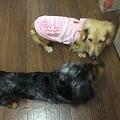 Photos: 美遊の様子がおかしい・・・(莉乃は尻尾下がりまくり~)