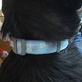 Photos: 爽やかな首輪を装着してもらったよ