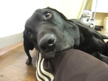 せめて枕の役でもしろ、と言ってるんでしょうか?!