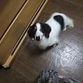 Photos: デカ犬達が暴れてる~~!