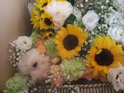 花で飾りました