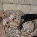 Photos: 大きなワンの横でも平気で寝る人和