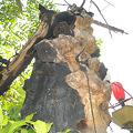 彫刻のアートの如し枯れ大樹