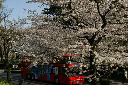 桜花見をバスから!(100403)