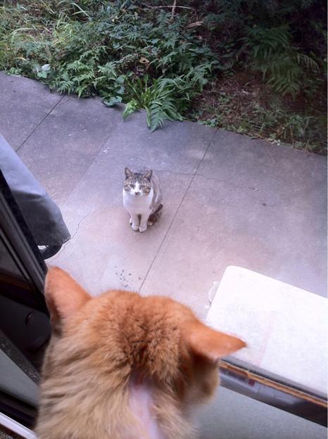 外猫さんが居た!オスカル警戒モード!!