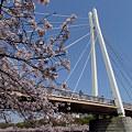 浪華桜~川崎橋
