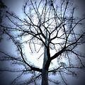 Photos: crystal tree