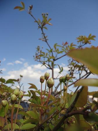 春の空と~