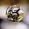 Photos: 魔法の木