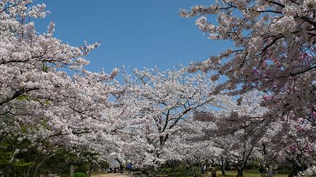 白野江植物公園(2)
