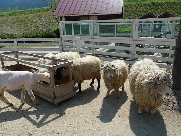写真: もーもーらんど油山牧場(3)