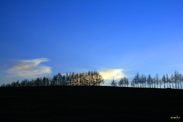 丘に並んだ木々