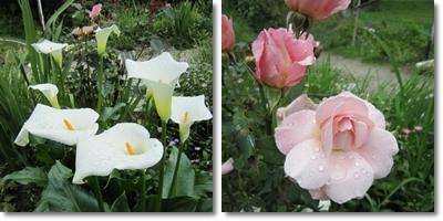 20110611 お花3