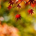 見上げると あちらこちらに 秋模様