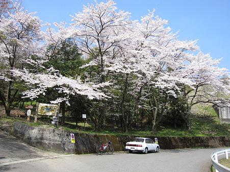 城山湖の桜(1)