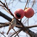 柿と小鳥・・1