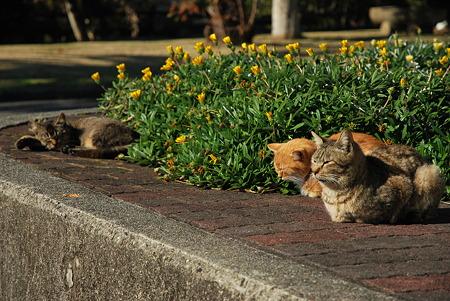 童謡の園・猫2