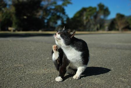 童謡の園・猫6