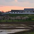 Photos: 桜と関宿城
