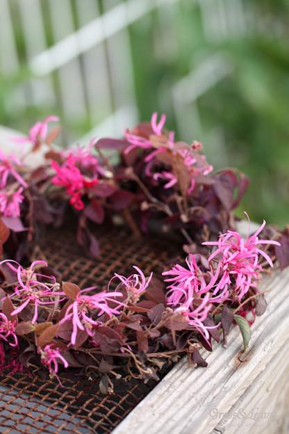 ベニバナトキワマンサクの花リース