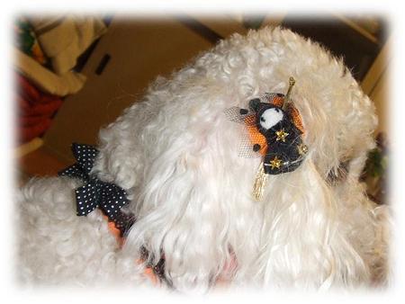 ハロウィンの耳飾り!?