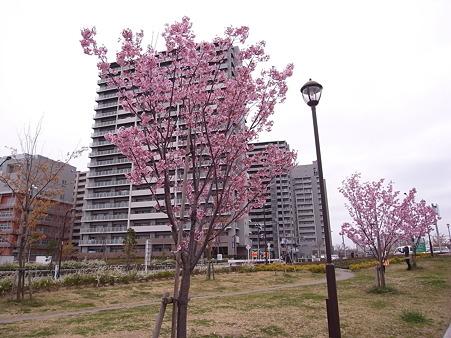 南千住 汐入公園の桜 2010-3-28 23