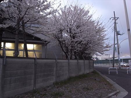 南千住の桜 2010-4-3 07