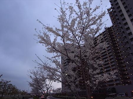 南千住の桜 2010-4-3 19
